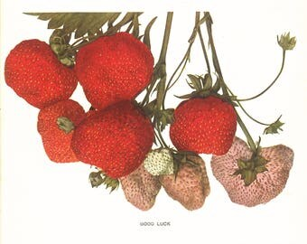 Fresh Fruit: Strawberries  print 1930s science manual framable - gift for florists fruit lovers botanical - poster print 4 sizes framable