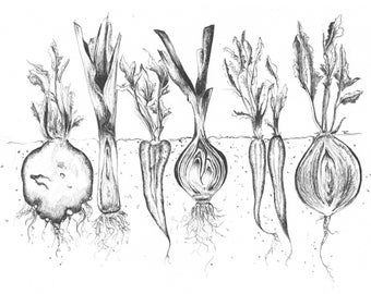 The Rooted Vegetables PRINT, CARD & ORIGINAL - Drawn By Rosie