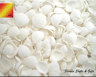 "4 oz (100) White Cay Cay Shells 1/2""-1"" Crafts Seashells Beach Wedding Decor"
