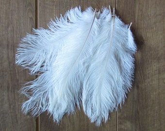 "White Ostrich Feathers (10-12"")"