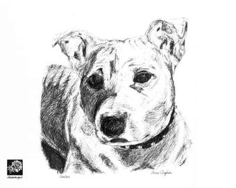Pet Portraits - Made to order hand drawn pen and ink illustration