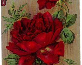 Antique 1910 Birthday Greetings big red roses victorian postcard