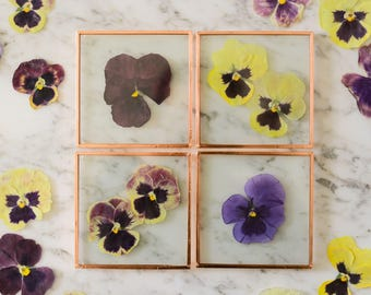 Set of 4 Pressed Flower Coasters, Pansies (glass and copper) | botanical home decor
