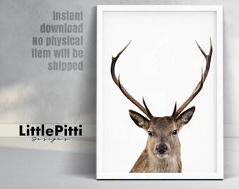 Deer head and antlers, deer wall art, large digital download, woodland nursery, woodlands decor, deer photo, nursery print, woodland animal