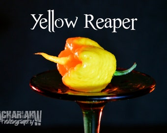 Yellow Reaper (15+ Seeds)