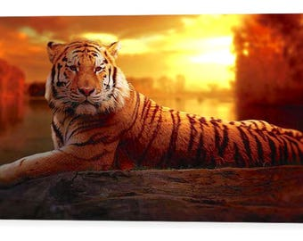 "Tiger at Sunset Photo Canvas Art Repro 16"" x 8"", 20"" x 12"", 24"" x 14"", 30"" x 16"", 44"" x 24"""