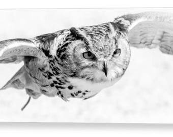 "Owl in flight Photo Canvas Art 14"" x 8"", 16"" x 10"", 20"" x 12"", 30"" x 18"""