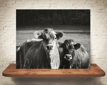 Jersey Cow Photograph - Fine Art Print - Black White Photography - Wall Art - Wall Decor -  Farm Pictures - Farm House Decor - Cows