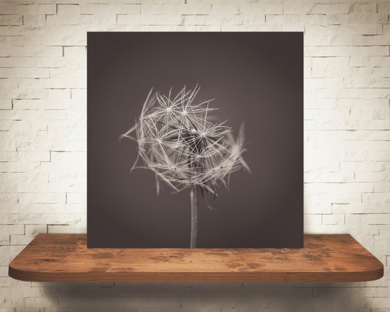 Dandelion Photograph - Black White Photography - Fine Art Print - Home Wall Decor - Nature Pictures - Children's Decor - House Warming Gifts