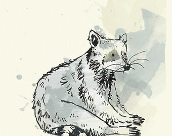 Greetings Card - Raccoon