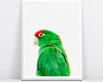 Tropical Parrot Wall Art, Green Bird Print, Bird Photography, Green and Red Parrot, Large Printable Poster, Tropical Wall Art Decor