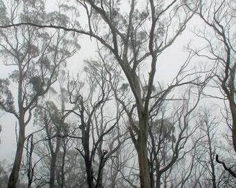 Misty Morning Forest