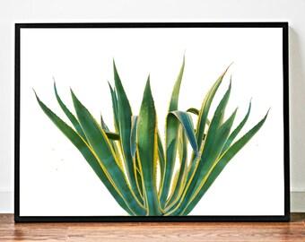 Agave Print Art, Agave Plant Print, Art Cactus Wall Print, Cactus Art, Cactus Print, Wall Art Print *20*