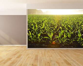 Wall Art Growing Corn Field Wallpaper HUGE