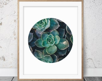 Succulent print, Cactus print, Circle print, Cactus art, Botanical print, Succulent art, Circle art, Home decor, Printable art, Succulent 06