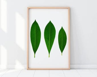 Tropical Leaves, Exotic Leaves, Leaves, Abstract Poster, Modern Artwork, Tropical Printable, Leaves Photography, Leaf Photography