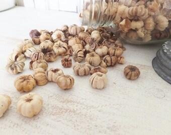 FALL PUTKA PODS ~ Craft Supply ~ Natural Potpourri ~ Holiday Decor ~ Fairy Garden Decor ~ Floral ~ Christmas Bowl Fillers