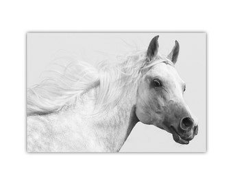 White Horse, Stallion, Canvas Print, Animal Wall Art, Large Poster, Photography