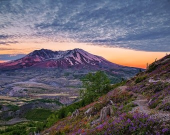Mount Saint Helens photo,wildflower photography,sunset picture,volcano art,fine art photography,canvas art,wall art, wall decor,wall art