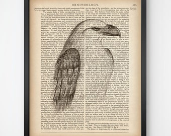 Dictionary art, Print on book paper, Bird print vintage, Bird wall art, Instant download printable art, Prints, 8x10 print, 11x14 print, JPG