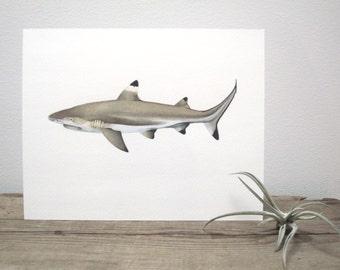 Blacktip Reef Shark Watercolor Giclée Print