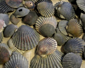 Atlantic Bay Scallops