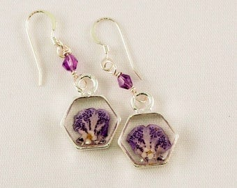 Unique real dried purple flower and sweet alyssum blossom sit in silver frame dangling from amethyst bicone and silver earwires.