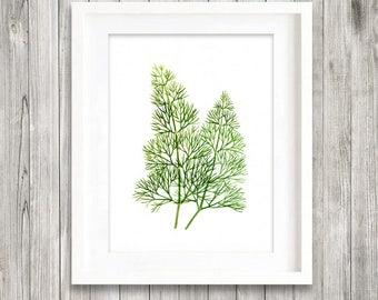 Dill print of watercolour painting, Herb painting, Botanical Print, green home decor art print, kitchen decor