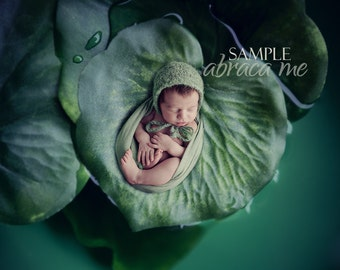 newborn digital background/ water lily leaves / digital backdrop/instant download