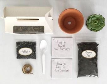 Classic Succulent Kit