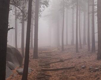 A Stroll Through the Mist