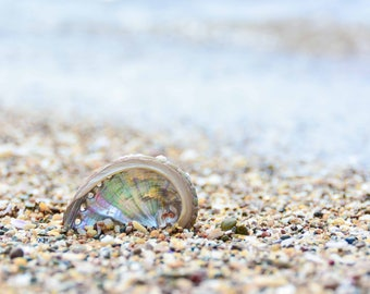 beach photography, beach, beach photo, shell, seashore, fine art, abalone shell, wall art, beach image