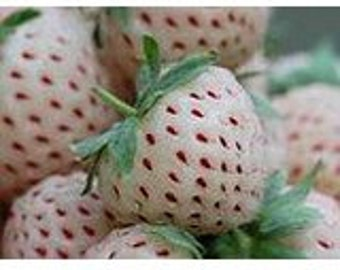 White Strawberry 20 + seeds/seeds - white pine-Strawberry-