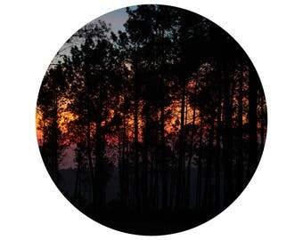 Sunset Through the Woods, Faded Colours, Circle of Trees, Rounded Frame, Visual Poetry,  Fine Art Print, Minimalist Photography
