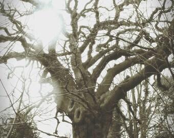 Thee Olde Tree