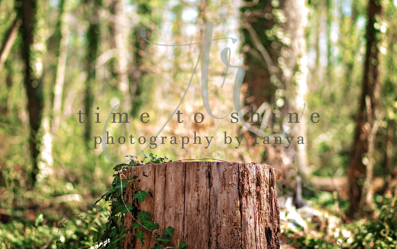 Tree Stump, Woods, Newborn, Digital Background, Photography, Photoshop, Composite, Digital Art ...