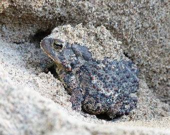Toad hot tub, sand and sun