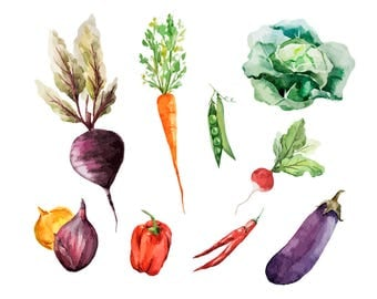 Watercolour Vegetable Clip Art Graphic Design PNG High Resolution C46
