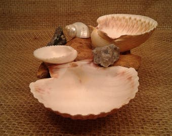 Sea Shell Hermit Crab Food/Water/Bath  Dish/Bowl HCFWB5