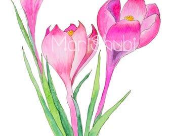 Sketch Flowers crocus