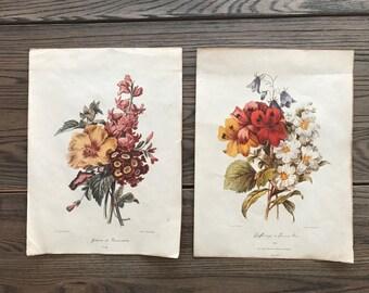 Set of Vintage Flower Prints 8.5 X 11
