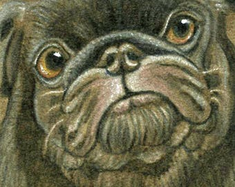 ACEO ATC  Drawing on Suede Original Black Pug Dog Art-Carla Smale