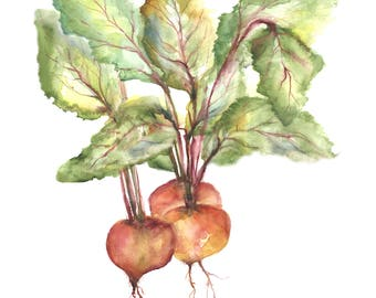 beets- beet watercolor print- watercolor vegetables-  beet watercolor painting-  kitchen artwork-  kitchen decor-  housewarming gift