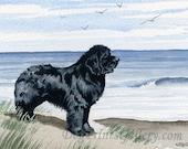 "Newfoundland Art Print ""NEWFOUNDLAND At The BEACH"" Signed by Artist D J Rogers"