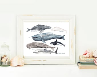 Whale Chart Instant Download Print Your Own Art Science Chart Instant art digital download