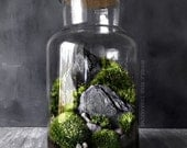CYBER MONDAY SALE Woodland Moss and Fern Terrarium in Large Glass Jar