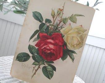 SALE * Vintage Roses * Signed Paul de Lonpgre * Antique Litho Print