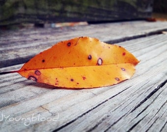 Photograph: Orange Autumn Leaf on Wooden Step Nature Photo 4x6 print