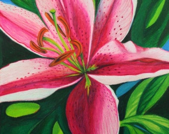 Oriental Stargazer Pink Lily Flower . Original Color Pencil Drawing . Flower Nature Art . Prismacolor Art