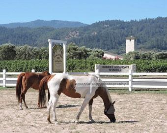 Napa Valley Horses photograph